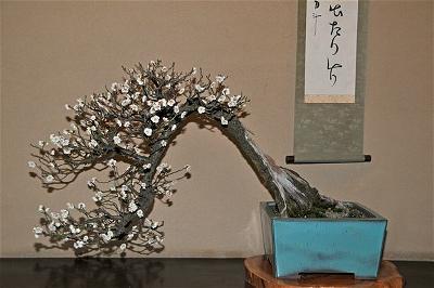 bonsai mua xuan 11